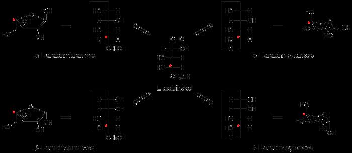 anomeric centre alpha and beta cazypedia